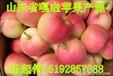 嘎啦苹果产地在哪山东嘎啦苹果产地价格
