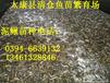 平顶山泥鳅苗荥阳八胡鲶鱼商丘黑鱼苗漯河观赏鱼苗大量供应