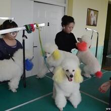 北京优缇多格宠物美容培训学校图片