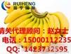 东南亚香蕉进口上海水果清关注意事项18B