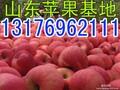 山东苹果基地图片