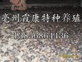 亳州土元养殖成本图片