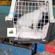 宠物出境手续宠物珠海到澳门猫猫狗狗到台湾托运宠物托运货到付款图片
