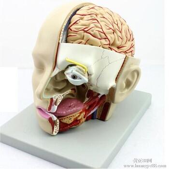 医用颅脑矢状窦解剖头脑部解剖模型口腔鼻咽喉模型_颅脑价格|图片