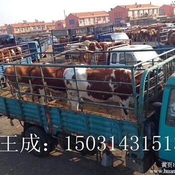 供应牛交易市场