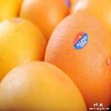 进口澳洲橙子需要准备的资料和证件