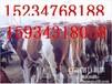 合作社转型低价出售肉牛