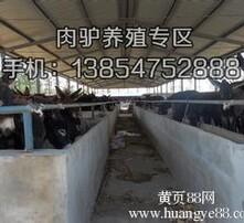 养殖,养殖场,山东养殖场图片
