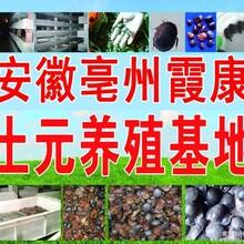 郏县土元养殖效益