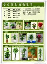 苏州绿植租摆服务优质售后良好景观设计园艺租摆临时长期花艺
