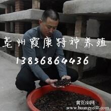 新蔡土元养殖好项目