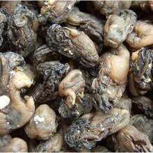 供应海蛎干低价促销批发海蛎干批发海鲜干制品图片