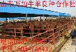 肉牛羊养殖业效益分析新出规划养殖