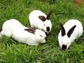 野兔当前多少钱一只了,大型野兔散养成本图片