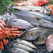 进口韩国冻鱼清关流程
