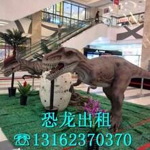 南京展会服务供应商道具厂家直销
