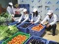 福永蔬菜价格、蔬菜配送、农产品批发图片