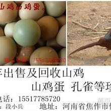 常年供应山鸡蛋淘汰母山鸡山鸡苗山鸡鹧鸪孔雀