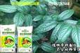 出口东南亚生物有机肥供货商,深圳微生物肥料,广州微生物有机肥直销