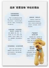 北京好的宠物美容培训学校
