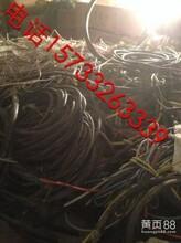 东山区高价收购电缆鹤岗大量回收电缆