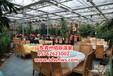 优质生态餐厅温室大棚建设
