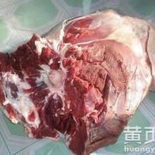 冷冻驴肉进口驴肉批发昆明冷冻驴副批发厂家图片