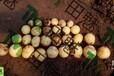 供应小土豆加盟