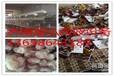 熟食微波杀菌机/袋装食品微波杀菌设备