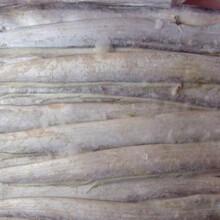 深圳低价批发进口冷冻带鱼供应商电话图片
